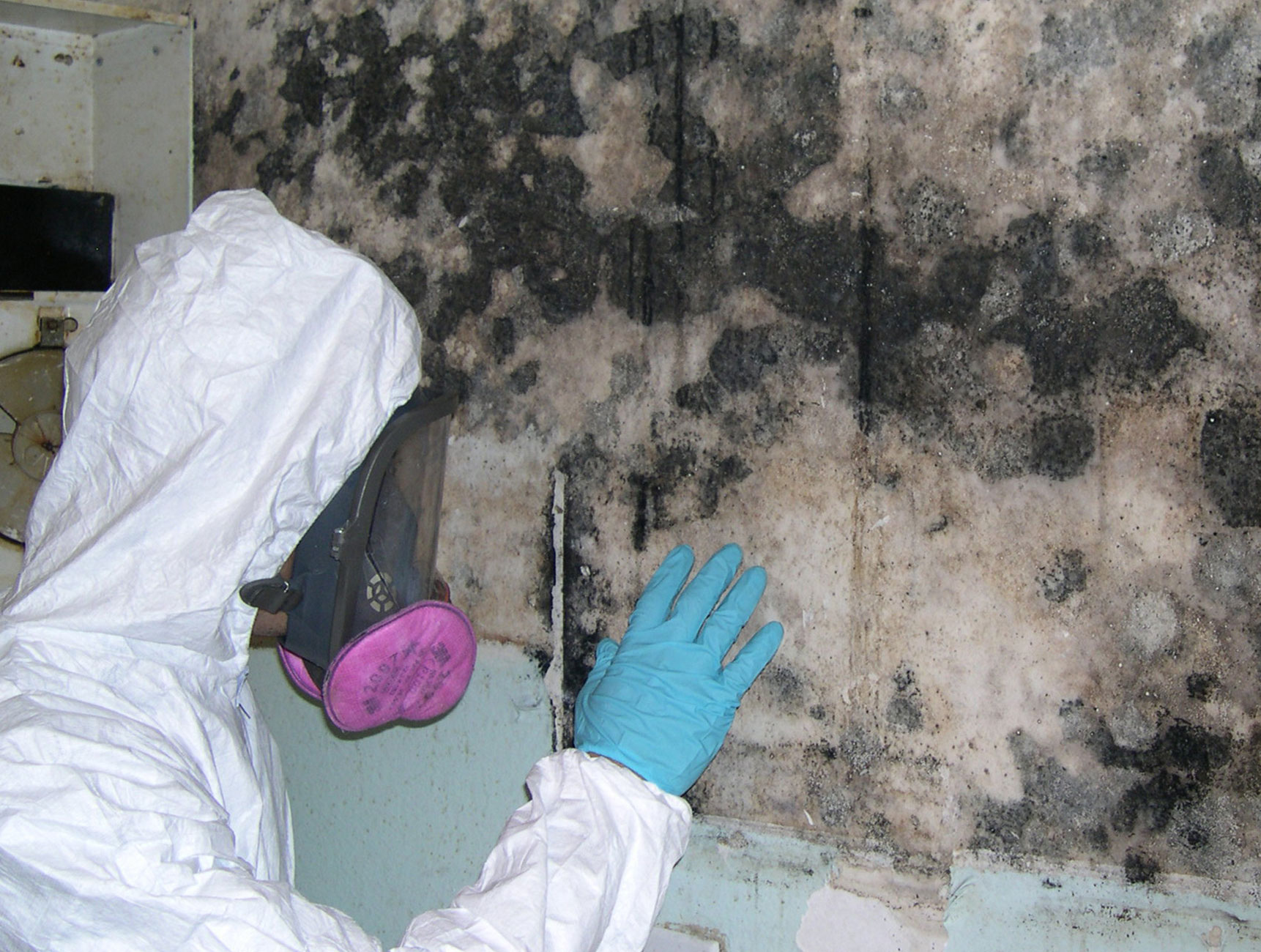 Contact Our Professional Certified Mold Specialists About Inspection And Removal Service Call 813 965 5602